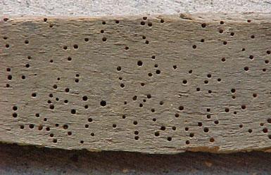 Carpet Beetle Damage To Clothes Carpet Vidalondon